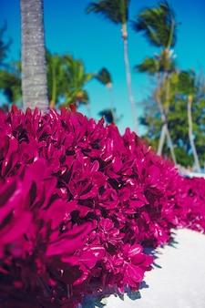 Playa tropical de verano con palmeras y arbustos rosados
