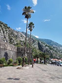 Plaza con palmeras en kotor, montenegro