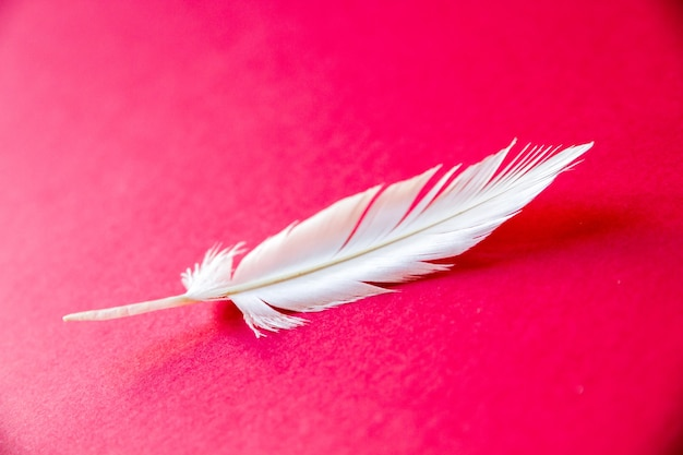 Pluma de ala de pájaro blanco aislado sobre fondo rojo.