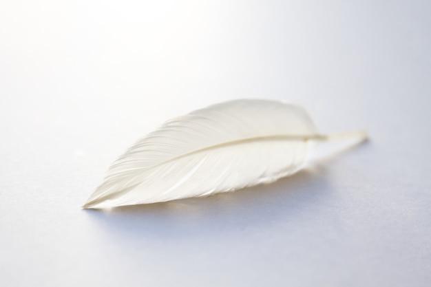 Pluma de ala de pájaro blanco sobre fondo claro