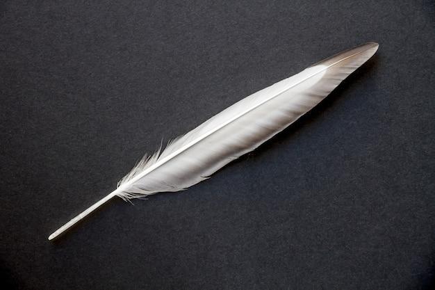 Pluma de ala de pájaro descansando sobre un fondo gris