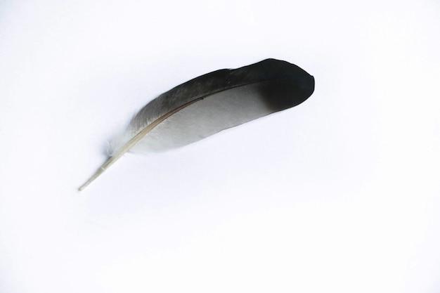 Pluma animal color blanco y negro sobre fondo aislado