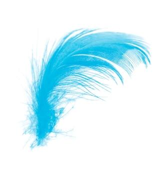 Pluma azul aislada sobre fondo blanco