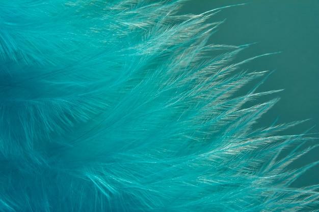 Pluma azul delicada sobre un fondo azul