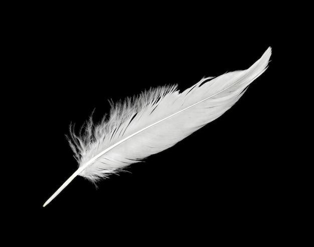 Pluma blanca aislada sobre fondo negro
