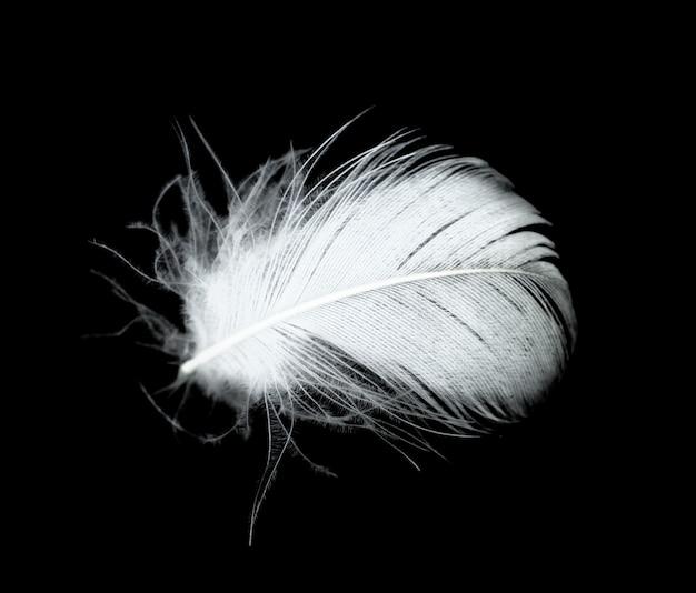 Pluma blanca sobre fondo negro