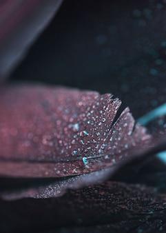 Pluma colorida hermosa fresca mojada en fondo texturizado