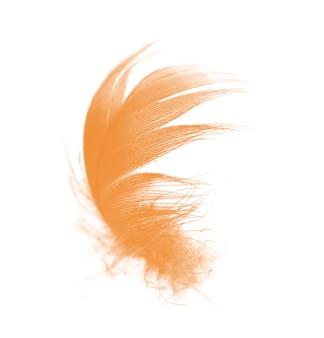 Pluma naranja aislada sobre fondo blanco