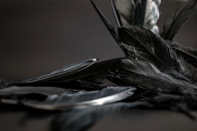 Pluma negra textura de fondo abstracto oscuro diseño moderno paz de ala de pájaro