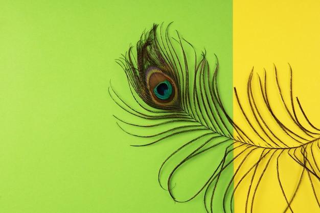 Pluma de pavo real sobre papel de color