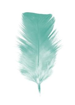 Pluma verde aislada sobre fondo blanco