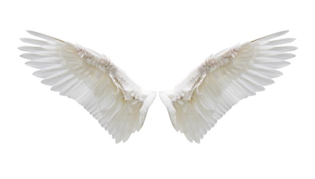 Plumaje interno del ala blanca