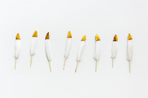 Plumas blancas doradas sobre una colección de fondo blanco