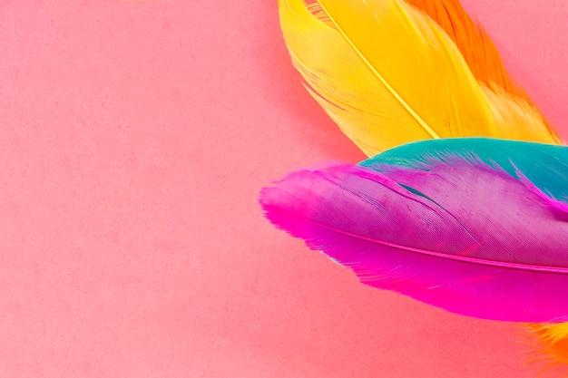 Plumas brillantes en rosa