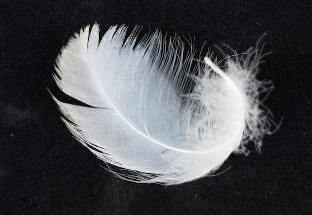 Plumas de cisne blanco aisladas sobre fondo negro