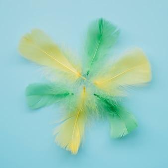 Plumas de colores de luz en el diseño