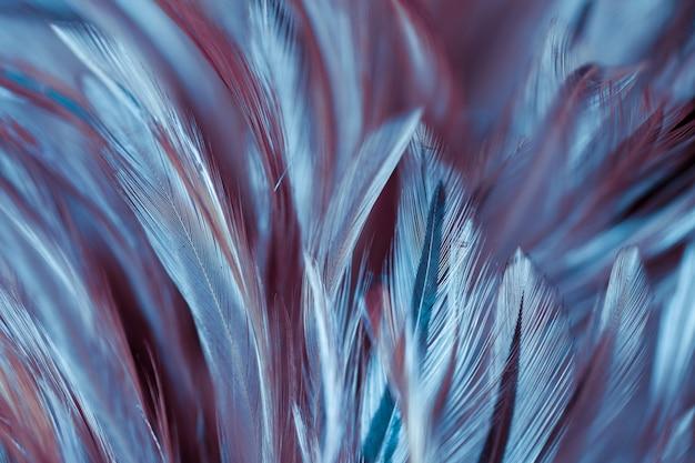 Plumas coloridas de aves y pollo en un estilo suave y borroso para el fondo