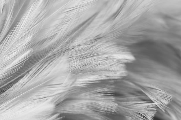 Plumas grises de aves y pollos en estilo suave y borroso para el fondo. tono oscuro