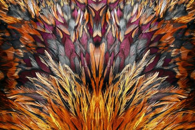 Plumas marrones brillantes de gallo de cerca.