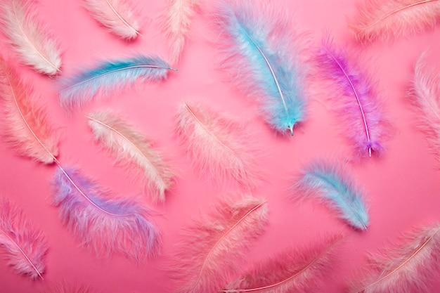 Plumas multicolores de color rosa y azul de plumaje de aves en un concepto de ligereza y ligereza de superficie rosa