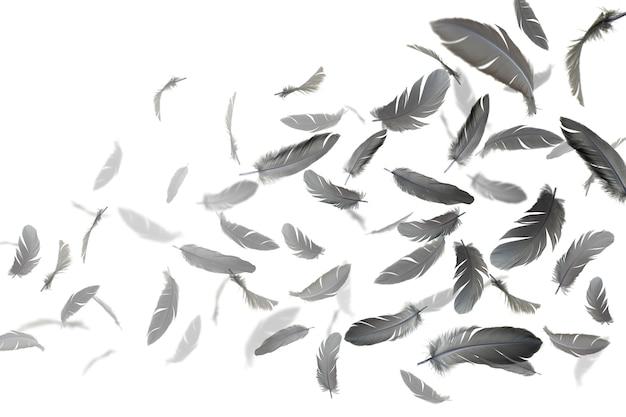 Plumas negras flotan en el aire