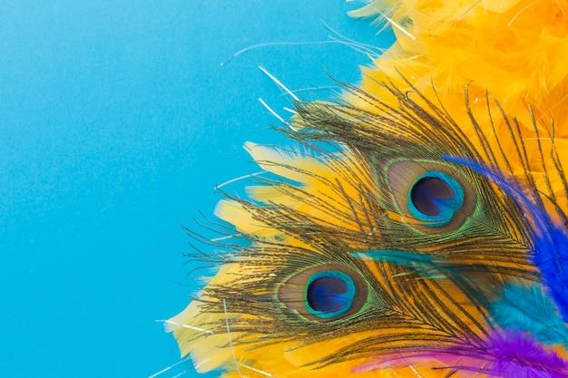 Plumas de pavo real elegantes con primer plano
