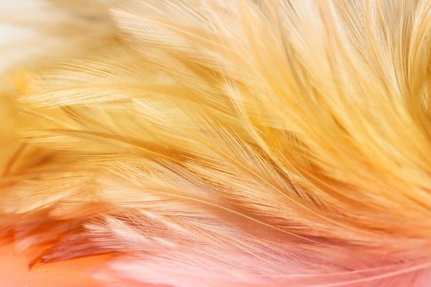 Plumas de pollo esponjosas en fondo de estilo suave y borroso