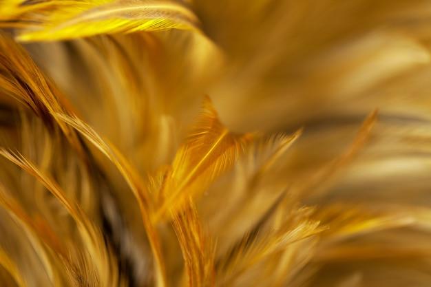 Plumas de pollo en estilo suave y borroso para el fondo, arte abstracto