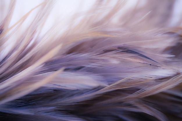 Plumas de pollo en estilo suave y borroso para el fondo