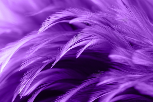 Plumas de pollo púrpura en estilo suave y borroso para el fondo