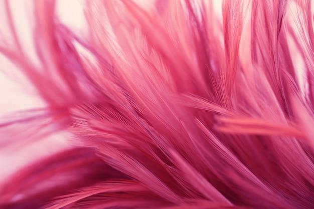 Plumas de pollo rosa en estilo suave y borroso para el fondo