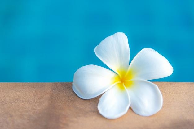 Plumeria flores spa cerca de la piscina, relajarse y cuidar la salud. concepto saludable