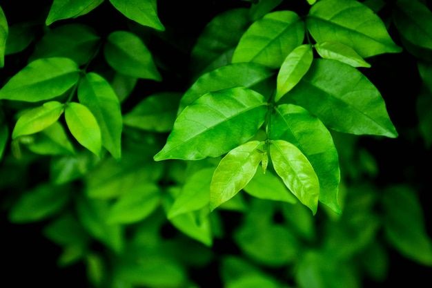 Poca hoja verde en la naturaleza - primer plano