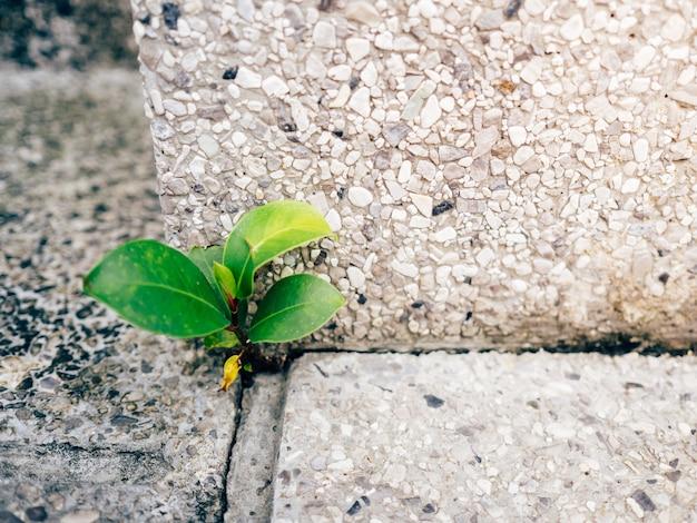 Poco brote fuerte que crece en la esquina del suelo de cemento.