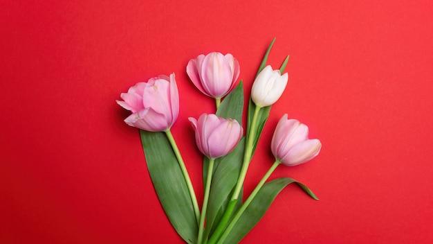Pocos tulipanes rosas sobre fondo rojo.