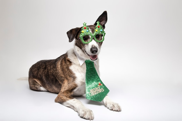 Podenco divertido acostado con gafas de árbol de navidad y corbata verde sobre blanco