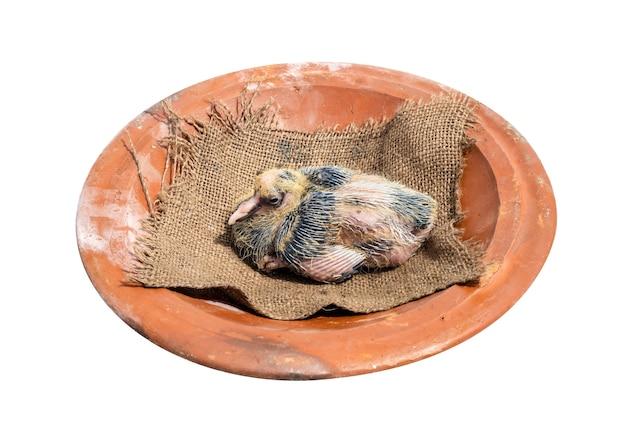 Pollito de pichón encima de una cazuela de barro sobre fondo blanco.