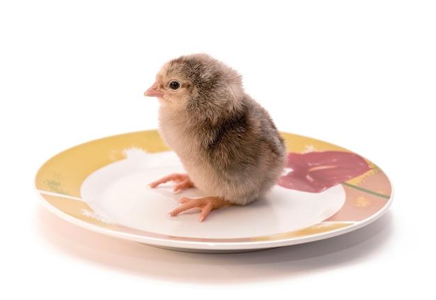 El pollo en un plato blanco.