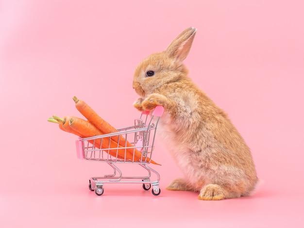 La posición linda del conejo del bebé de brown y sostiene el carro de la compra con las zanahorias de bebé.