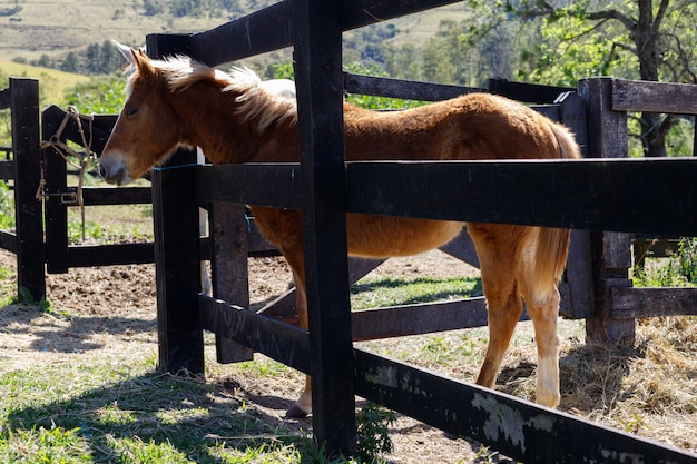 Potro en una granja en la luz del sol. caballo bebé. cerca de pastos de granja.