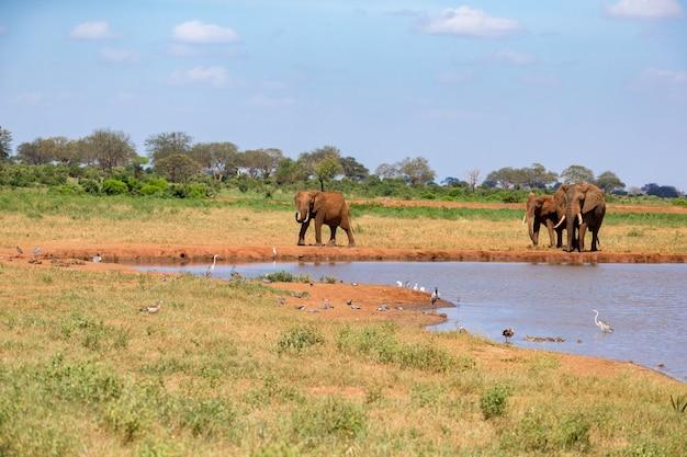 Un pozo de agua en la sabana con algunos elefantes rojos