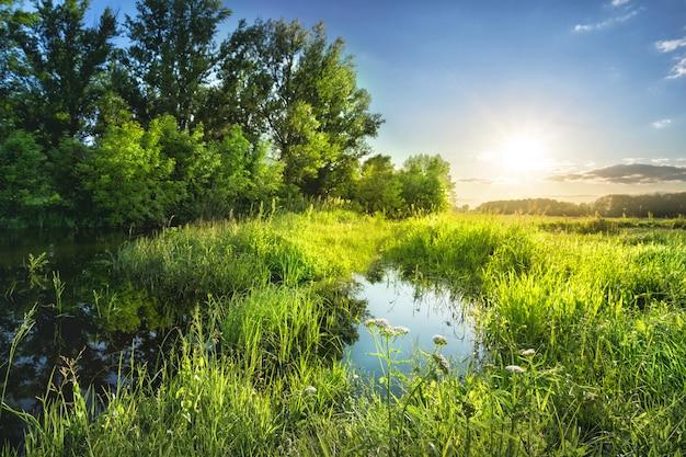 Pradera con el charco y hierba brillante