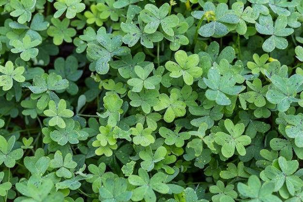 Pradera de muchas plantas verdes con rocío.