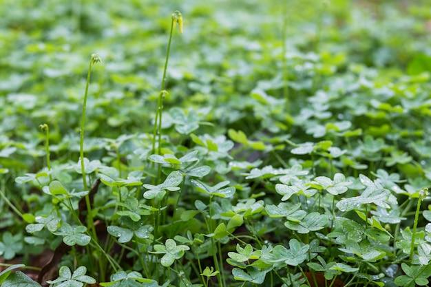 Pradera de plantas verdes con rocío.