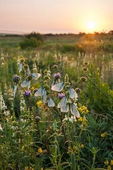 Prado de primavera con flores y mariposas en el paisaje del amanecer