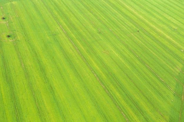 Prado verde desde una altura, huellas de la cosechadora, de fondo, textura