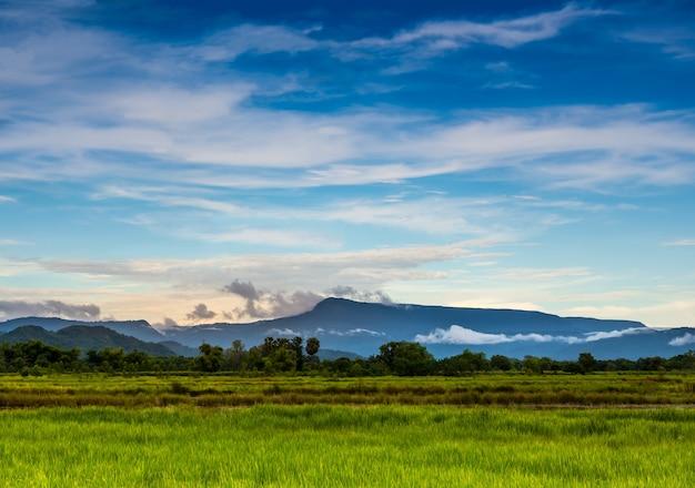 Prado verde en campo sobre fondo de cielo azul