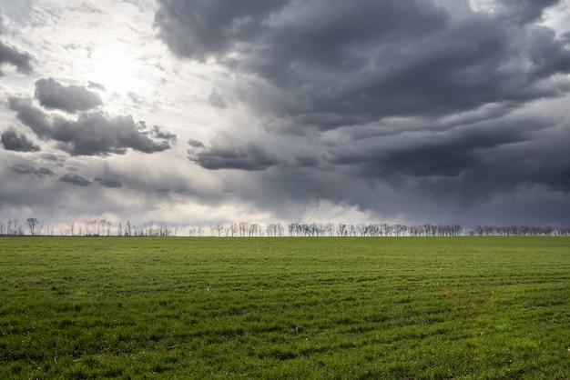 Prado verde y cielo azul con árboles en un horizonte