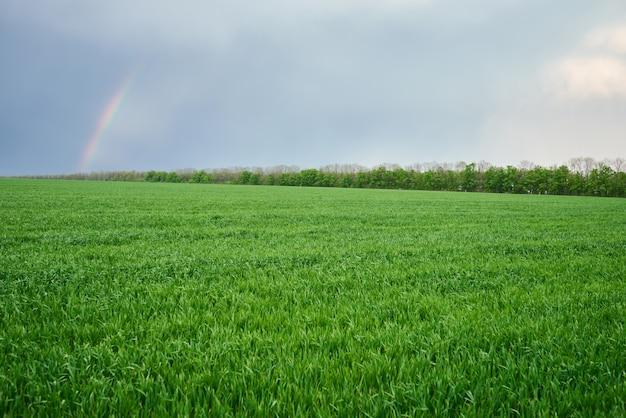 Prado verde y cielo azul con arco iris en el día de verano