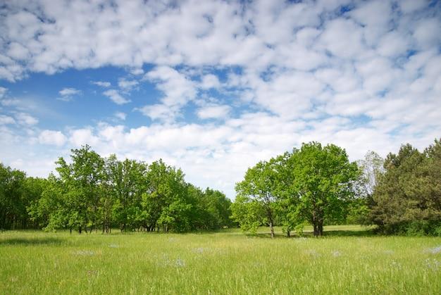 Prado verde y cielo azul con bosque